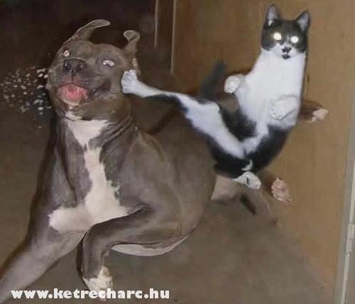 Macska és kutya - csata az elõszobában